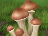 Изучаем грибы