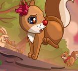 Белки - трагедия в лесу
