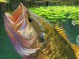 Рыбалка на Озере Зеленая Лагуна…